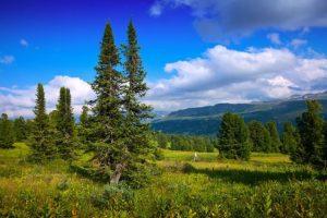 Které stromy se vám líbí nejvíc? Hodně to o vás vypoví a také se odhalí vaše klady