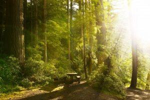 V kmenech a korunách stromů je tajemná síla. Pojďme ji objevit!