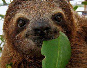 Příroda je mocná čarodějka. Inspirujte se u zvířat. Co dobrého se můžete naučit například od lenochodů?